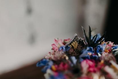 ERVButterfly-Spring2020-10